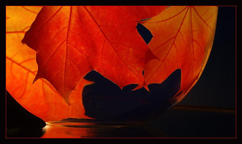 Herbstfärbung