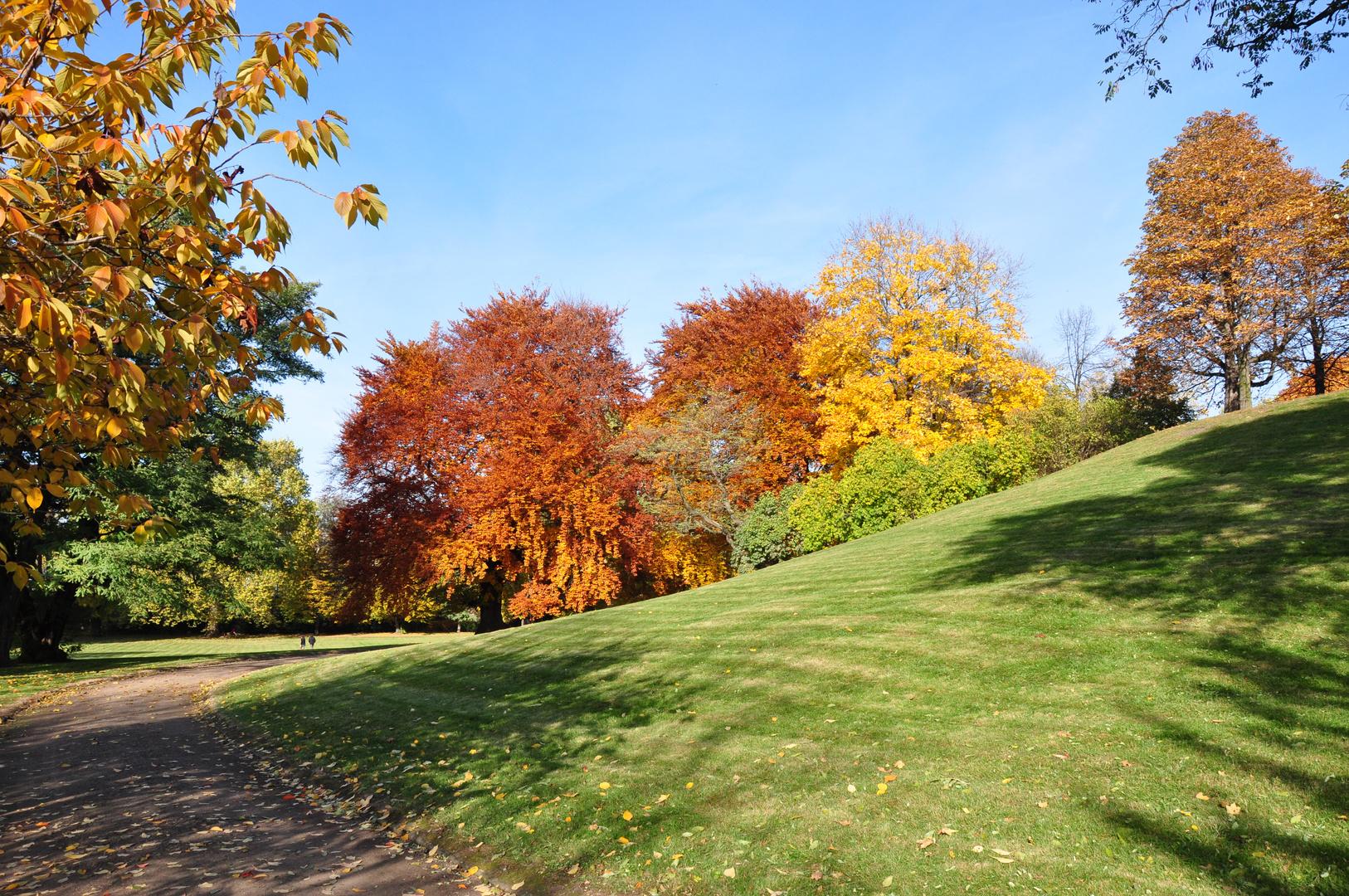 Herbstfärbung am Elbufer Dresden