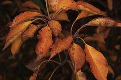 Herbstfärbung II