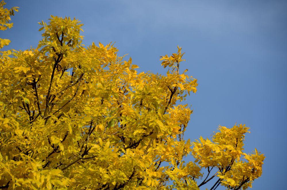 Herbstfarbe Gelb