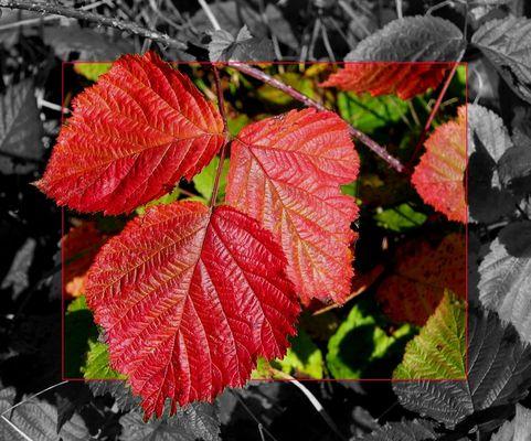   Herbstfarbe ... Rot  
