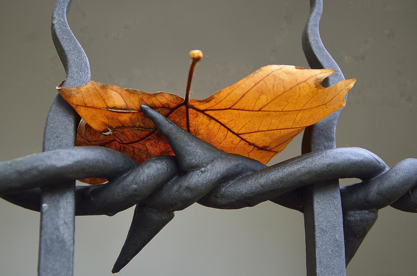 Herbstfarben 01