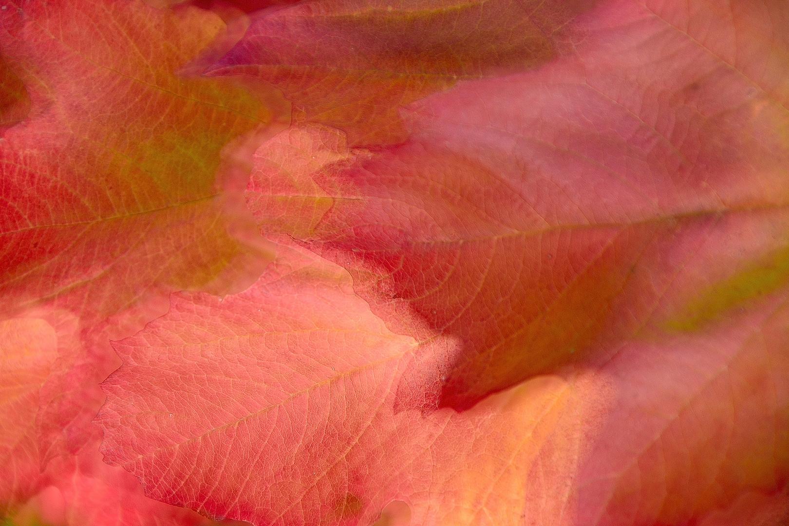 Herbstfarben 02