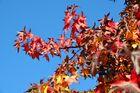 Herbstfarben 1