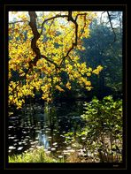 Herbstfarben #1