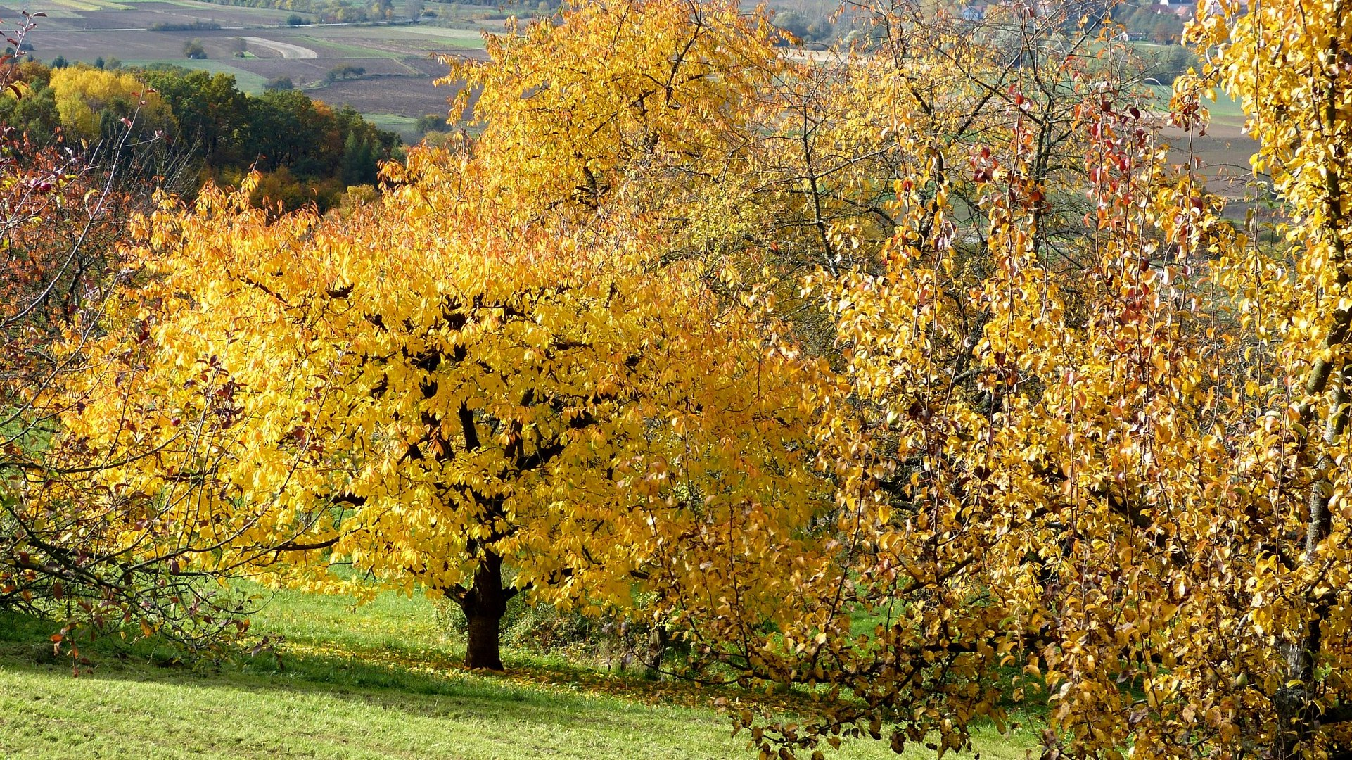 Herbstfarben 12