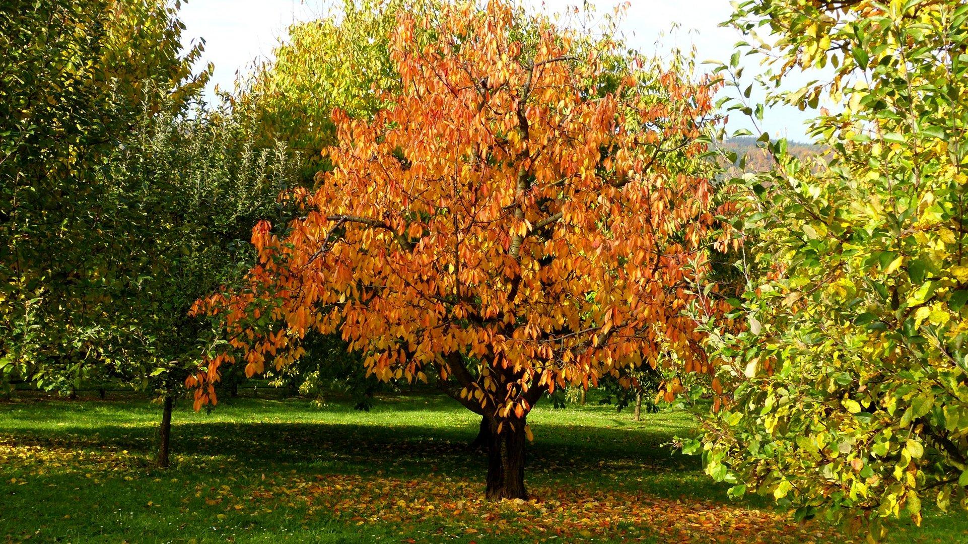 Herbstfarben 14