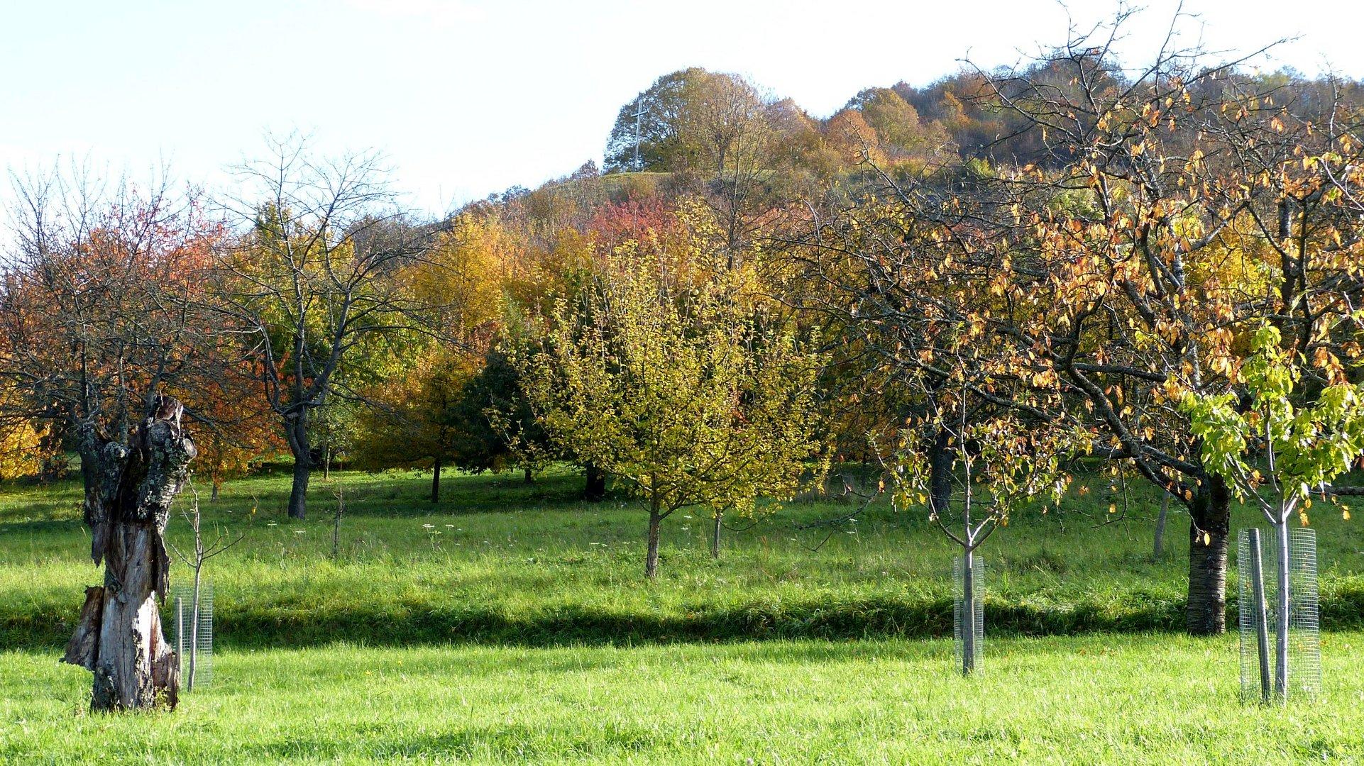 Herbstfarben 16