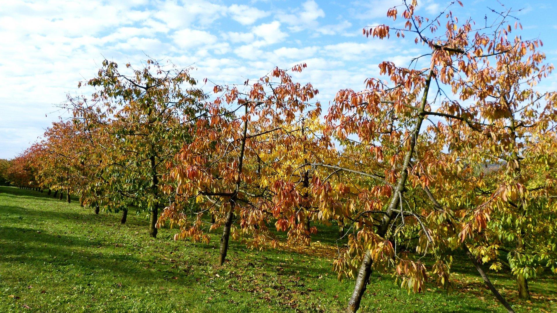 Herbstfarben 17