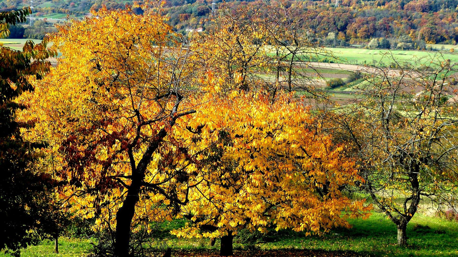Herbstfarben 19