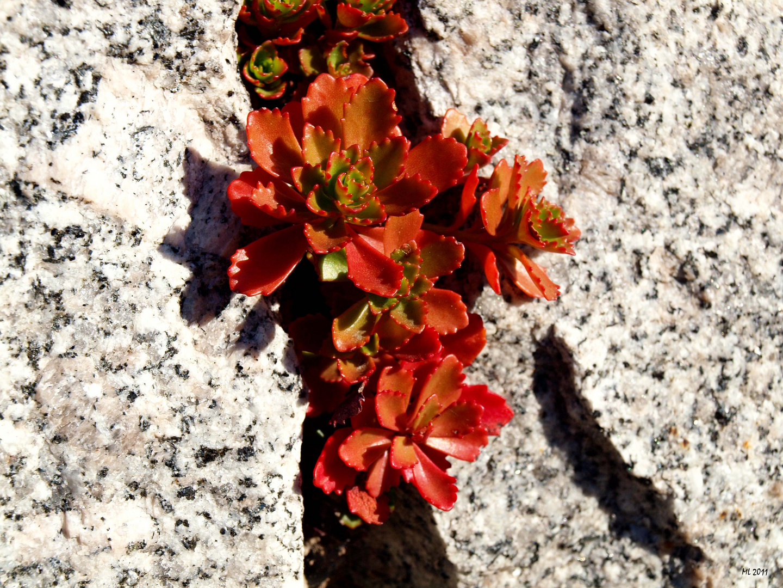 Herbstfarben #2