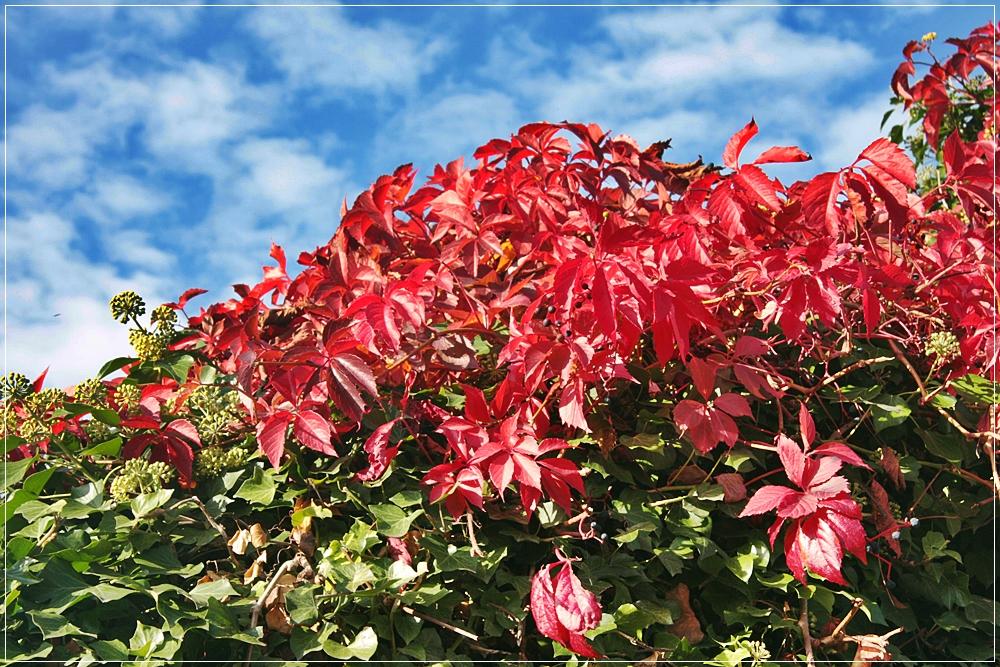 Herbstfarben 2012