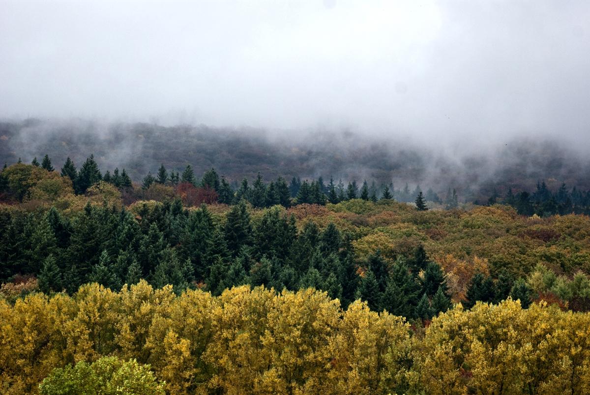 Herbstfarben 2013_04