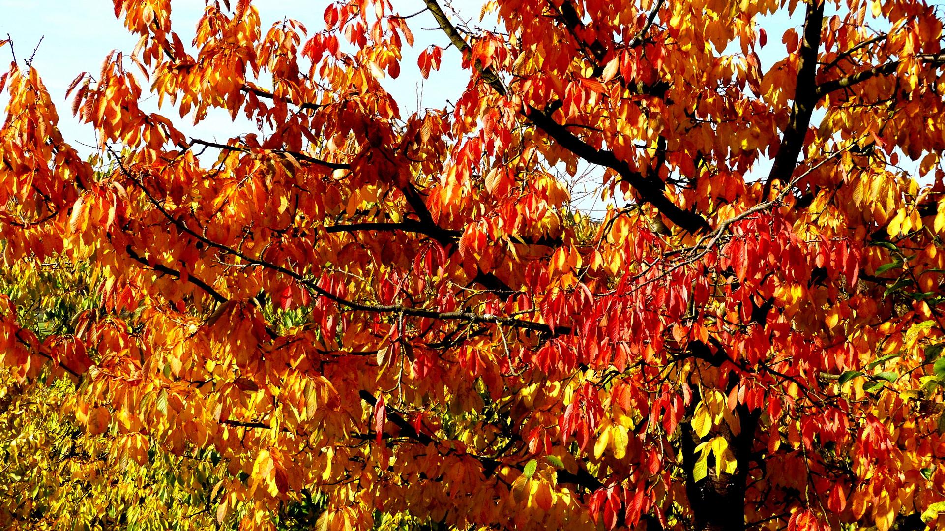Herbstfarben 21