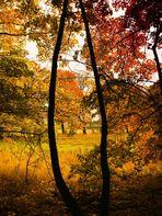 Herbstfarben...........