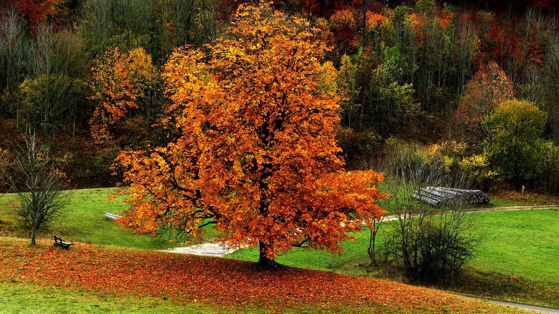 Herbstfarben 28
