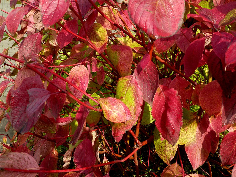 #...Herbstfarben.......#