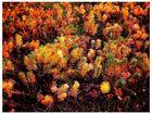 ::Herbstfarben::