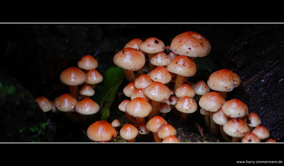 Herbstfarben-4