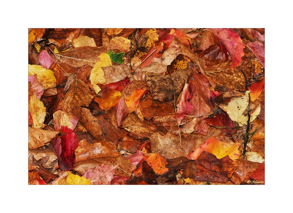 Herbstfarben 5