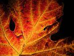 Herbstfarben!