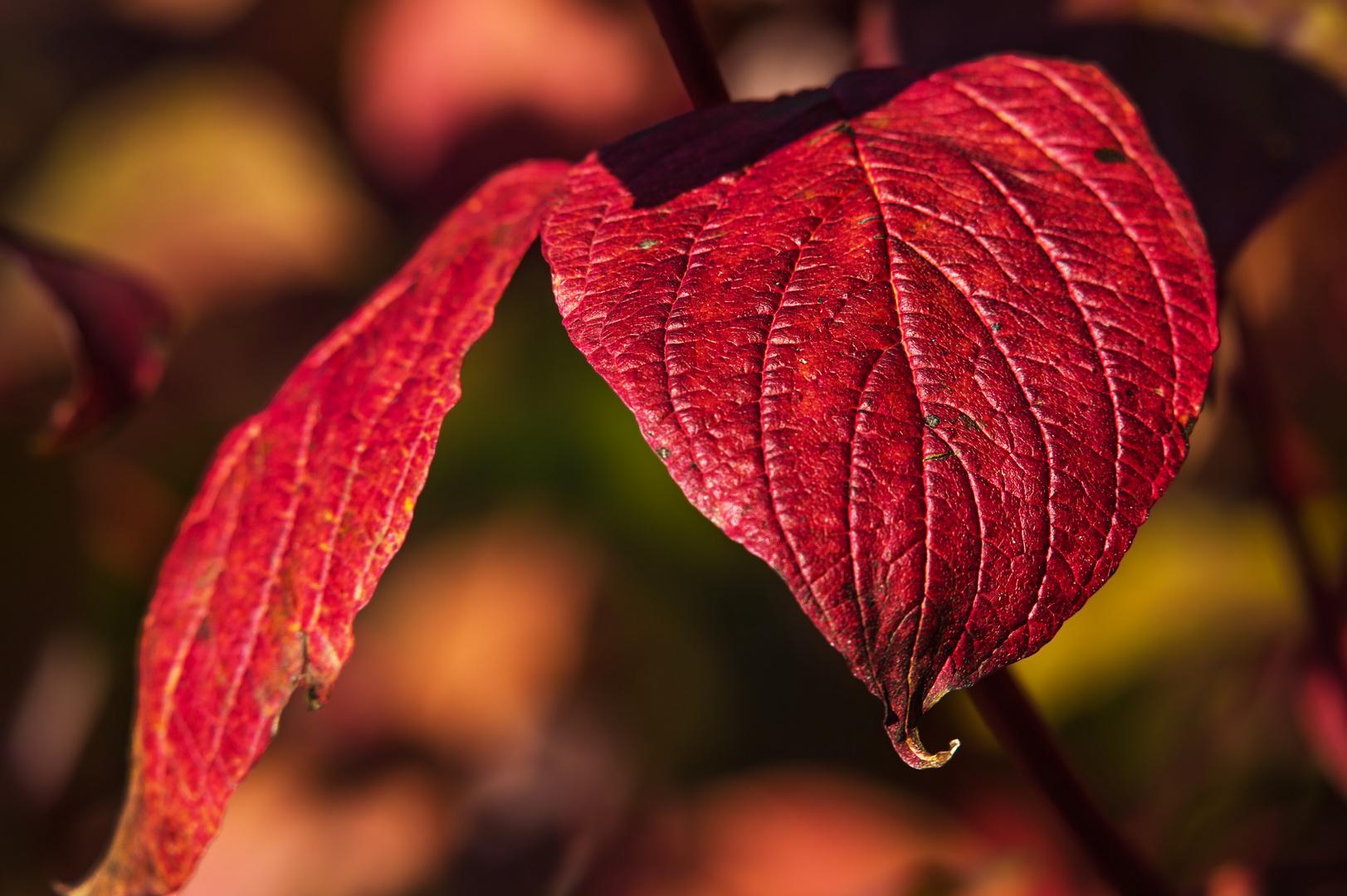 Herbstfarben ....