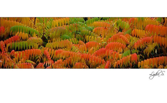 ...Herbstfarben...