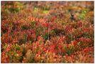 Herbstfarben von Jola Bartnik-Milz