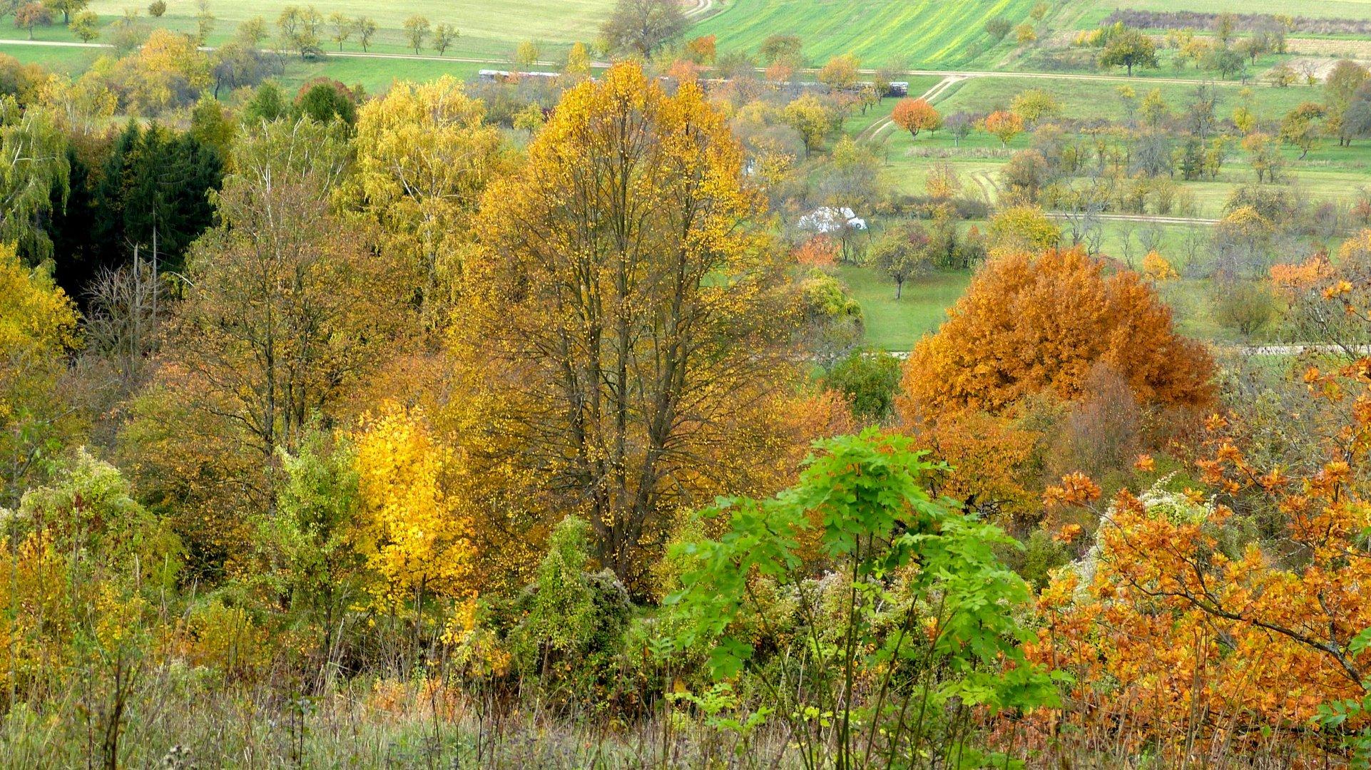 Herbstfarben 8