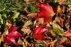 Herbstfarben am Boden