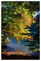 Herbstfarben am Langbathsee