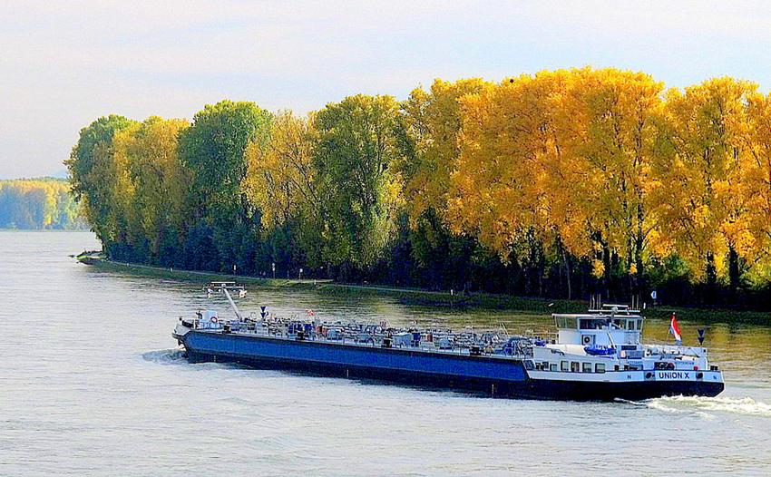 Herbstfarben am Rhein