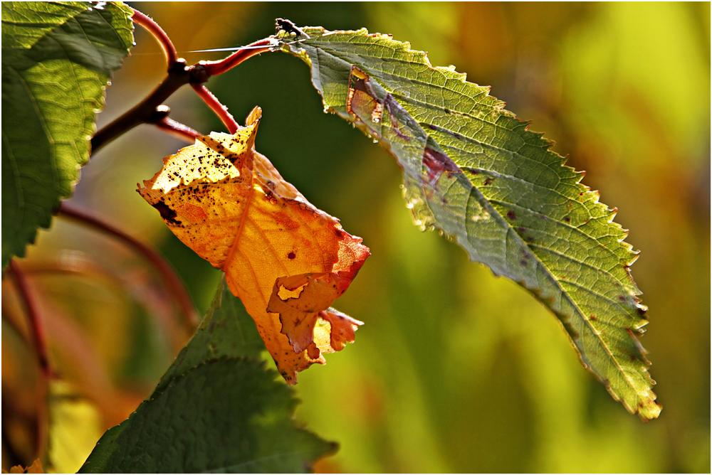 Herbstfarben an den Bäumen