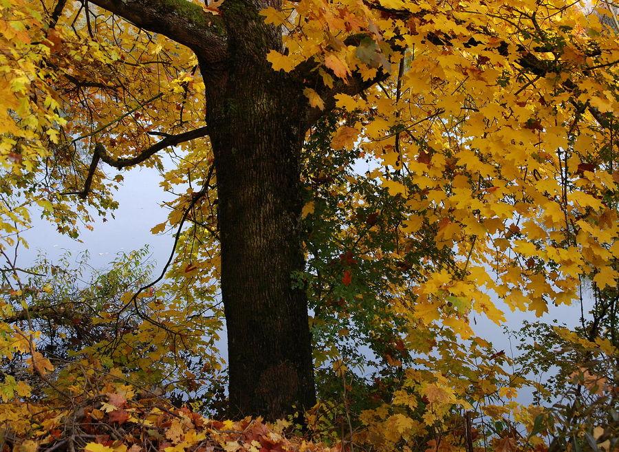 Herbstfarben an der Lahn