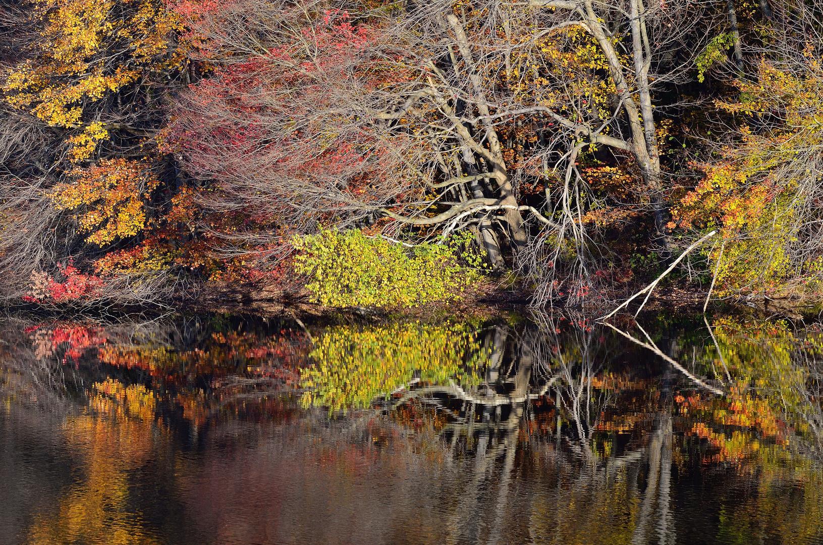 Herbstfarben an einem See in Massachussetts (1)