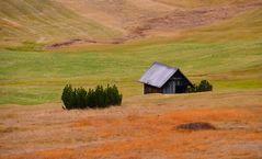 Herbstfarben auf der Bergwiesen