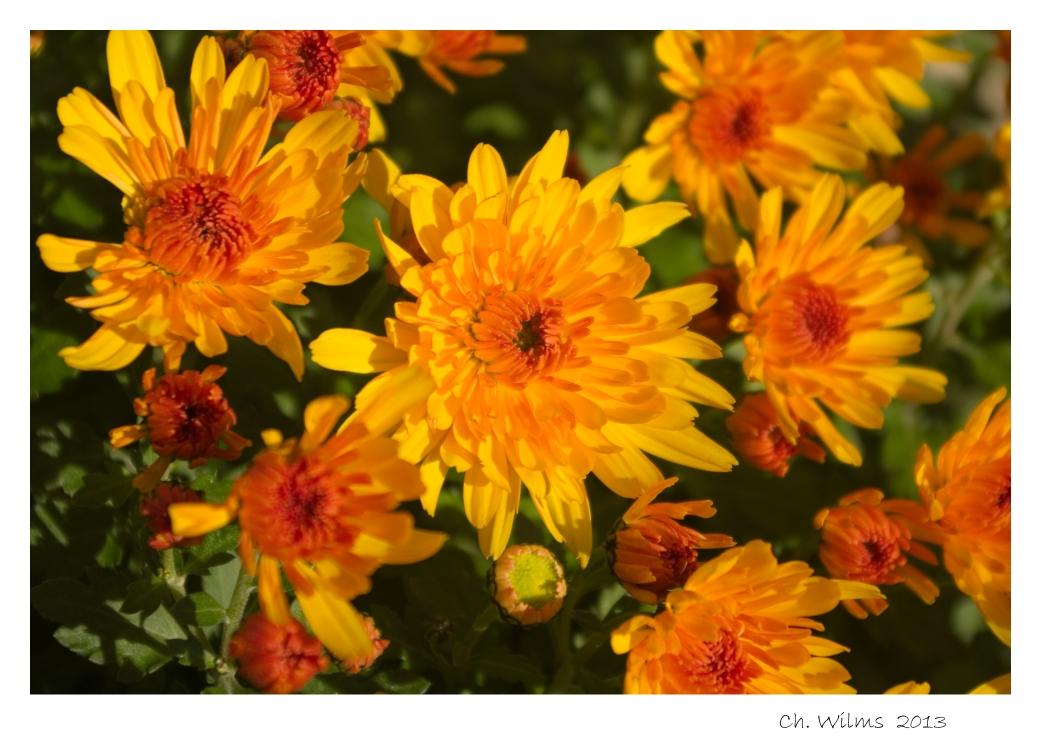Herbstfarben .......