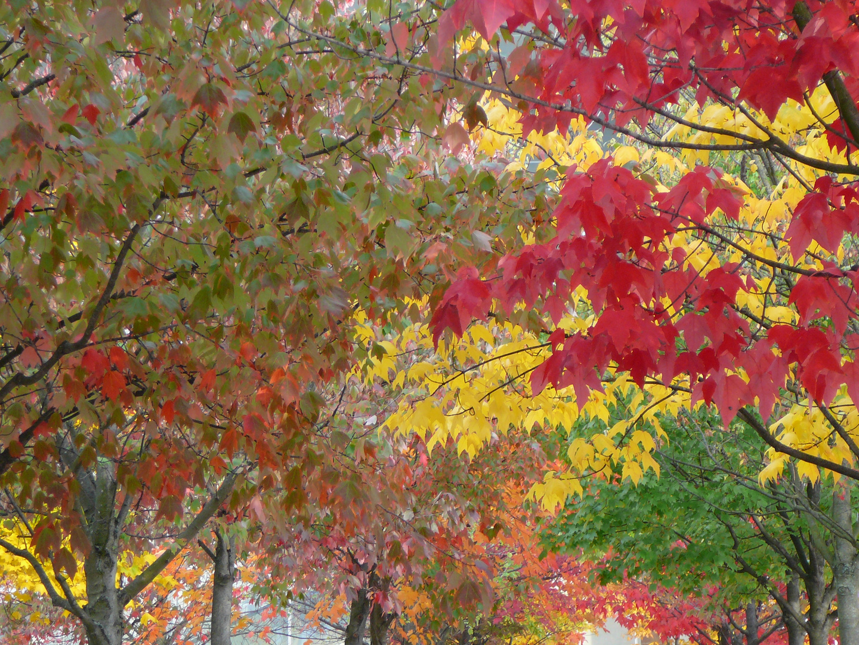 Herbstfarben Berlin