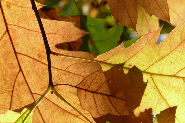 herbstfarben / couleurs d'automne