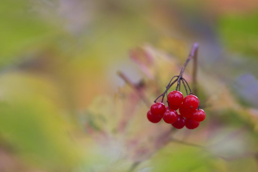 Herbstfarben....