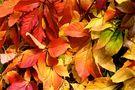 Herbstfarben der Natur von Mario Maggi