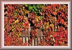 Herbstfarben.......