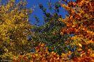 Herbstfarben von Willi Wegmann