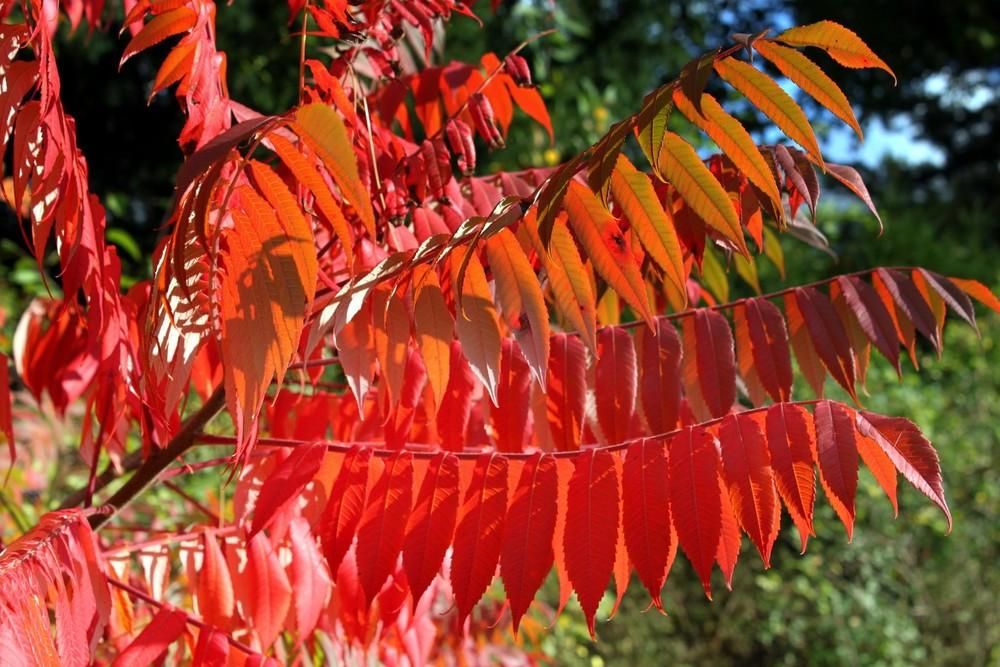 - Herbstfarben-