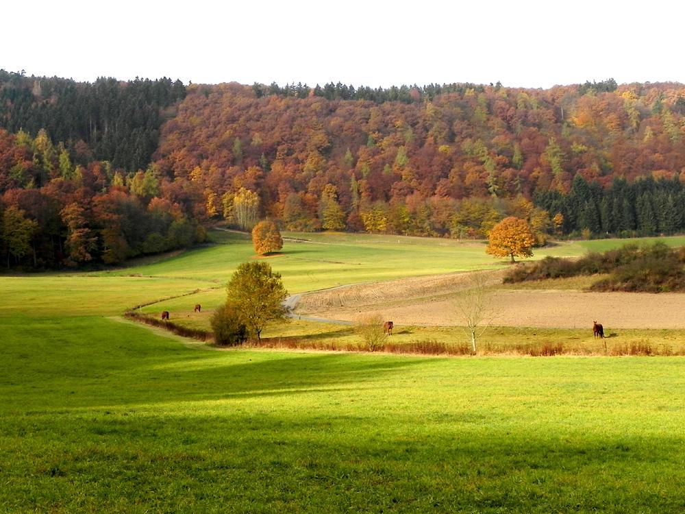 Herbstfarben im Ahrtal