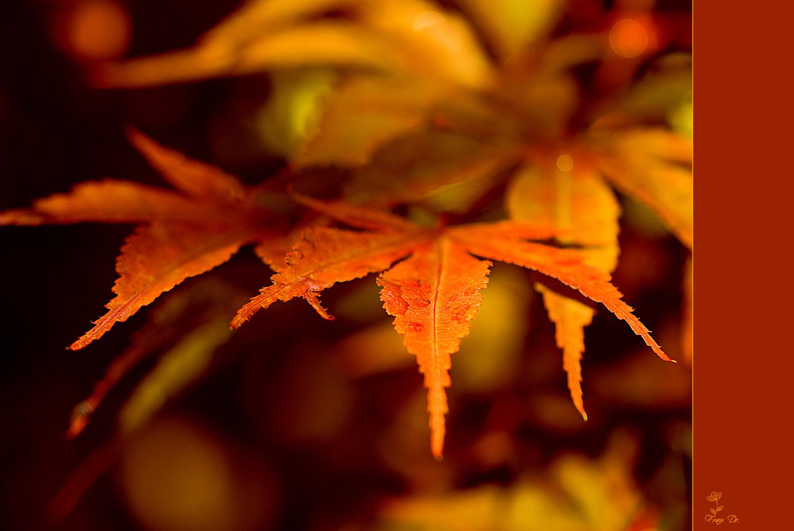 Herbstfarben im Altweibersommer