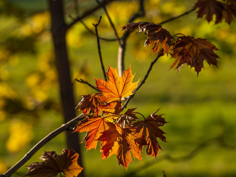 Herbstfarben im Frühling ...