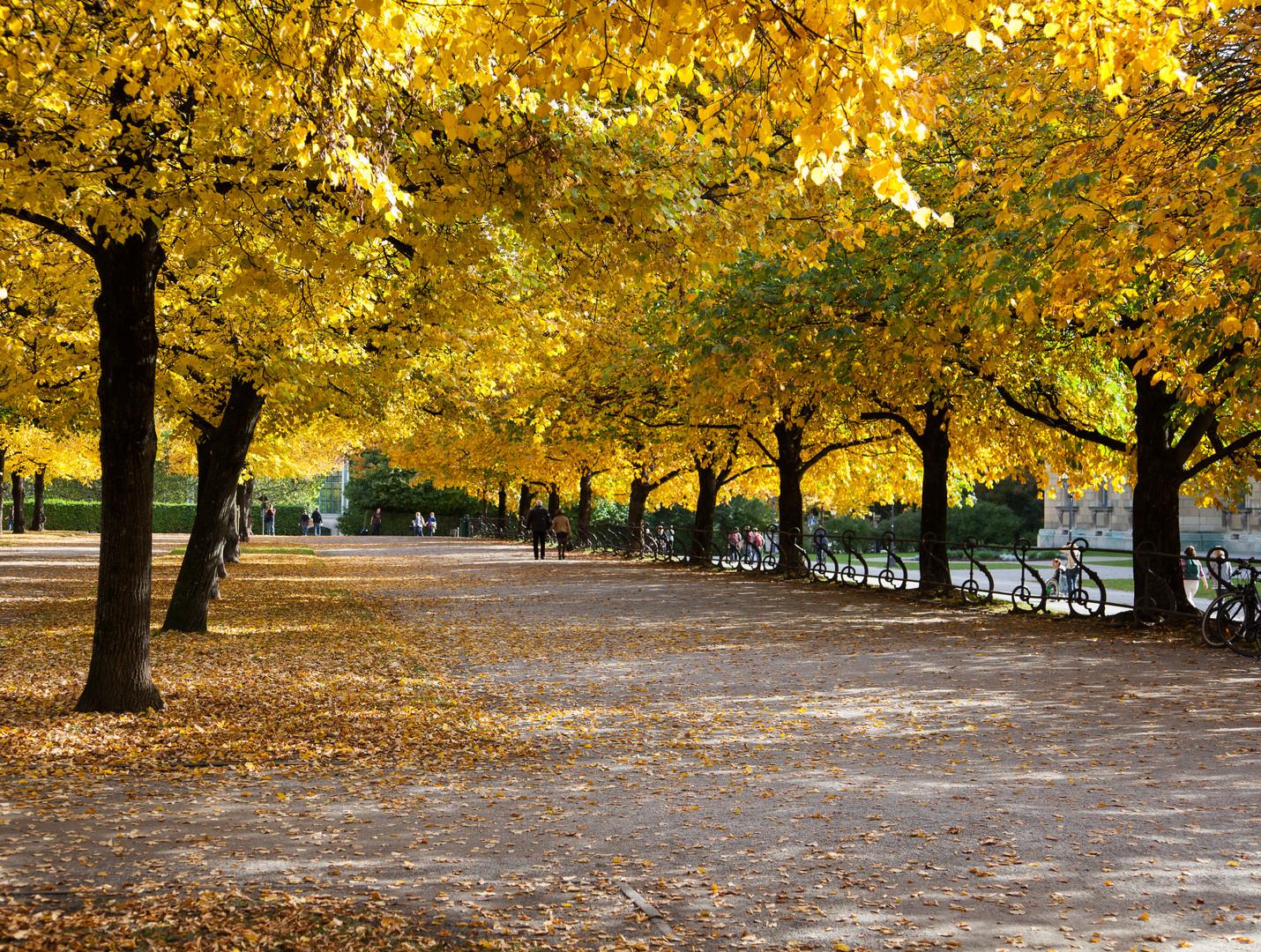 Herbstfarben im Hofgarten