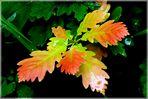 Herbstfarben im Juni ?
