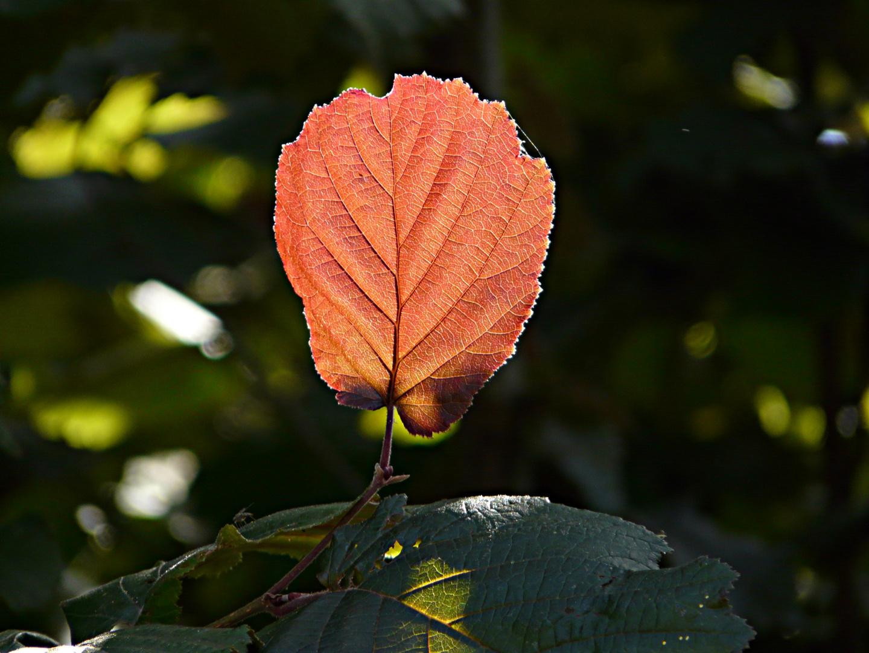 Herbstfarben im Sommer